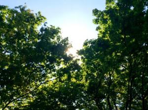 深緑の葉©日本縦断ブログ
