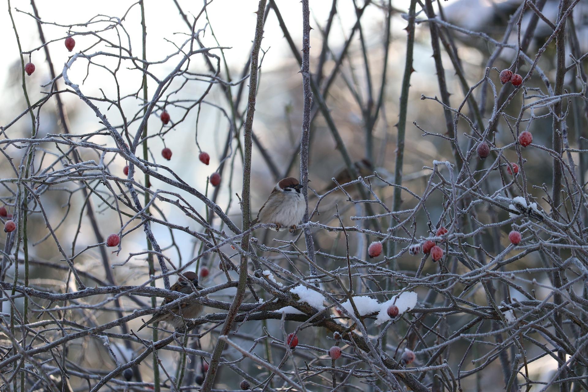 『したきりすずめのクリスマス』