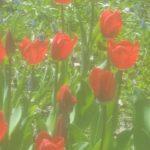 北海道の春の風景2017@百合が原公園