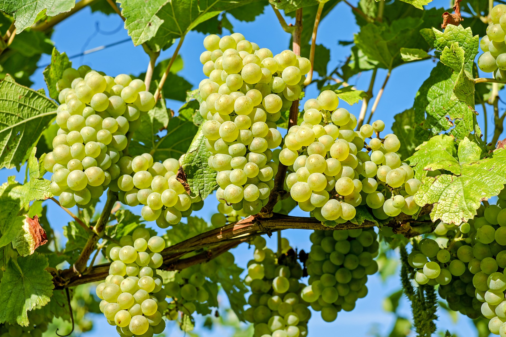 すっぱい葡萄と私の心