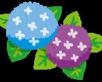 紫陽花の花言葉「辛抱強い愛情」