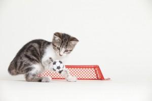 サッカー♡だにゃ