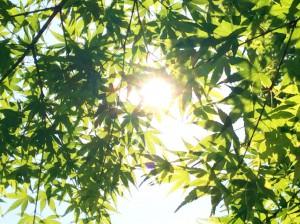 木漏れ日©摂理の御言葉を世界へ