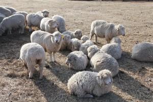 全ての羊が大切なように・・・