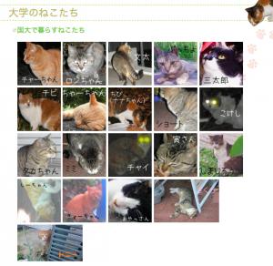 横浜国立大学ネコちゃんたち